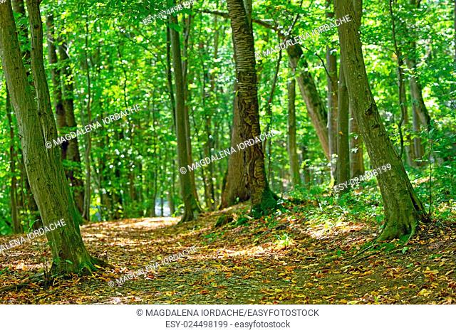 Forest path in september