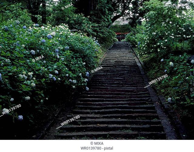 Stone Steps and Hydrangea, Sakuragawa, Ibaraki, Japan