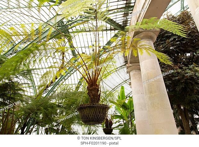 Green house with palms