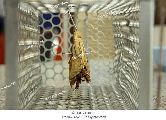 Cage mousetrap