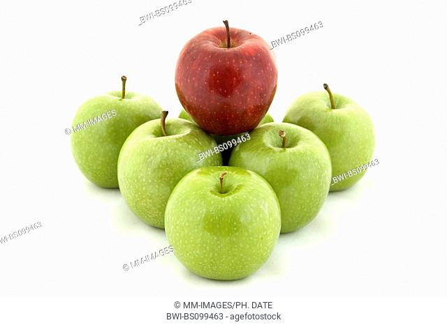 apple (Malus domestica), a red apple on green apples