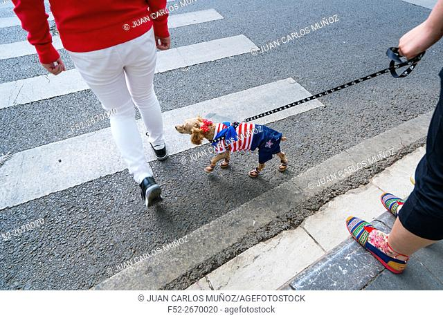 China, Yunnan, Kunming, Person crossing road on zebra crossing with dog