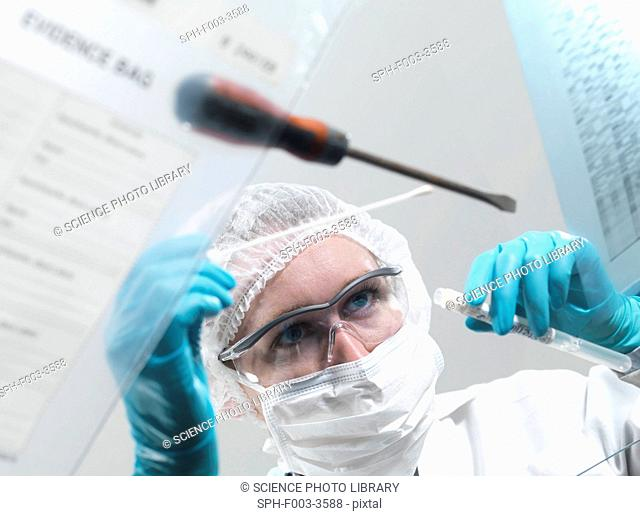 Forensic science. Forensic scientist taking a DNA deoxyribonucleic acid sample from a screwdriver