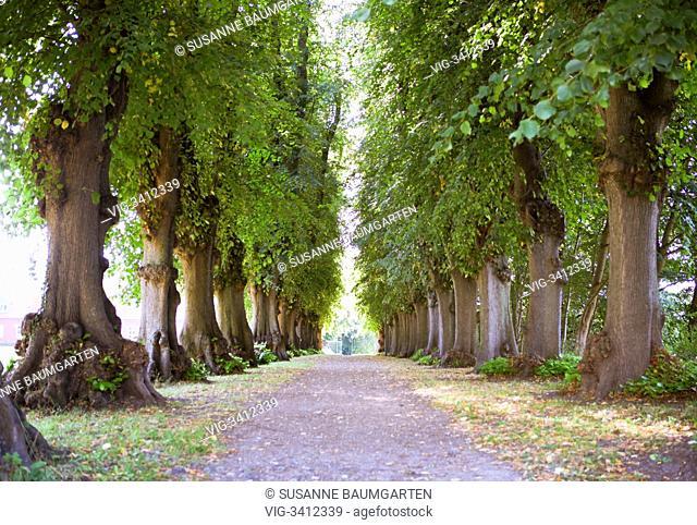 Tree-lined path - PLOEN, Germany, 04/09/2012