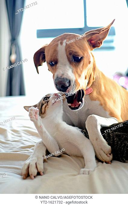 Dog and Kitten interact at home