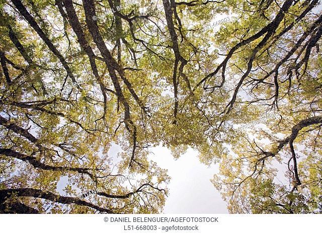 Canopy in autumn