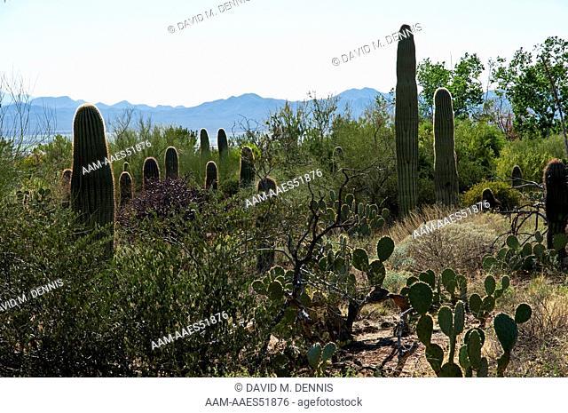 Arizona-Sonora Desert Museum, Tuscon, AZ