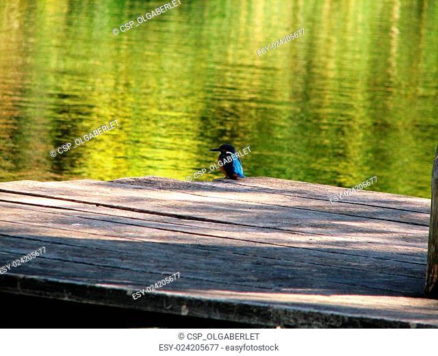 Beautiful blue Kingfisher bird
