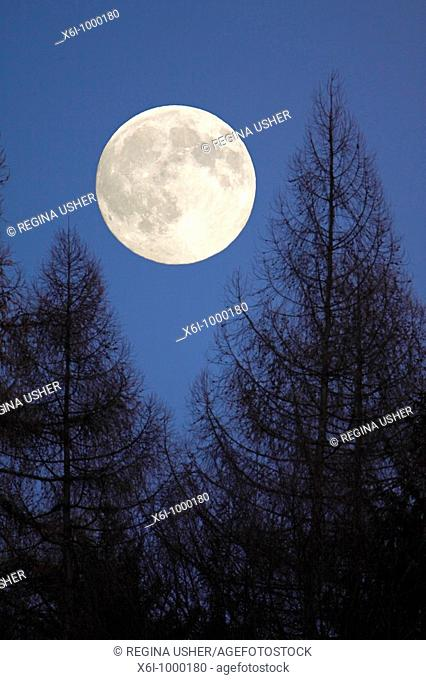 Full Moon, rising above forest in winter, Germany