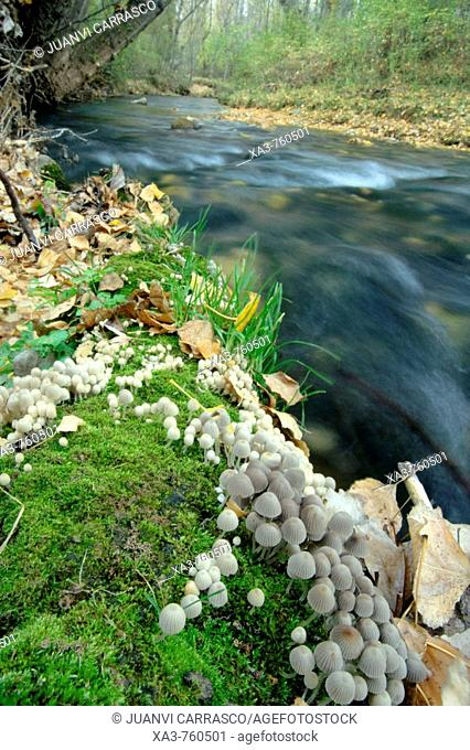 Mushrooms and moss at autumn. Guadalaviar river, Albarracin sierra, Teruel province, Spain
