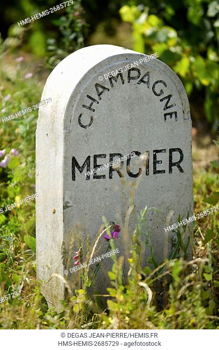 France, Marne, Ay, Marne valley, border bounding plot of land in a vineyard of Champagne ranked Grand Cru and listed as World Heritage by UNESCO