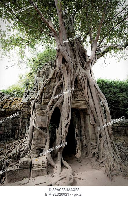 Tree roots growing over temple, Angkor, Cambodia