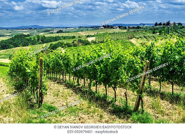 Vine plantations in Toscana, Italy