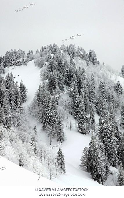"""The mountainous of """"""""La Grande Chartreuse"""""""" received the National Forest Exception label. After Fontainebleau and Verdun is the third site to receive this award"""