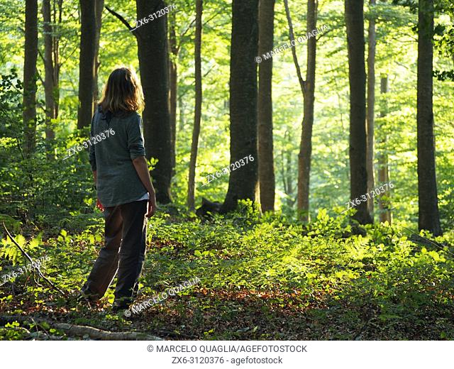 Woman watching beech forest (Fagus sylvatica) at Pla del Rovirol site, with late afternoon sunlight. Montseny Natural Park