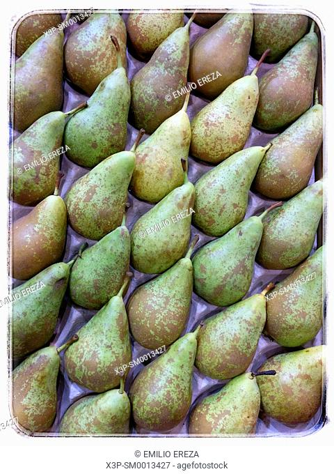 Pears. Conference variety