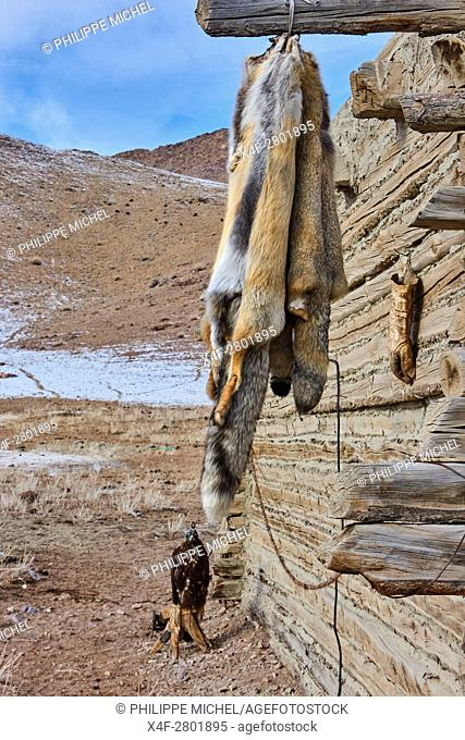 Mongolia, Bayan-Olgii province, Kazakh eagle hunting, wolf's fur