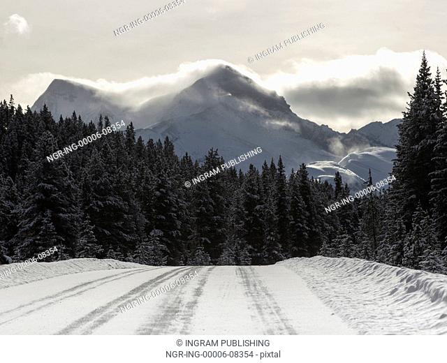 Road passing through forest, Improvement District No. 12, Maligne Lake, Jasper, Jasper National Park, Alberta, Canada