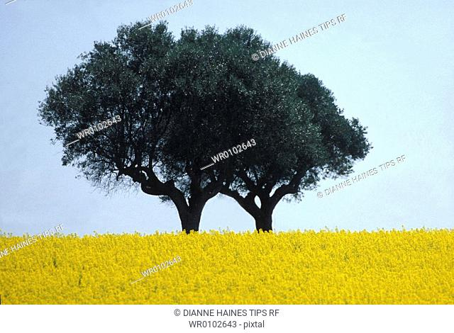 Tree and flowers field