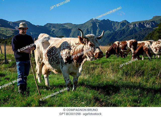 FARMER WITH HIS FERRANDAISE COWS, THE MONT-DORE, SANCY MOUNTAIN, PUY-DE-DOME (63), AUVERGNE, FRANCE