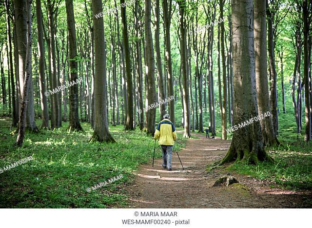 Germany, Mecklenburg-Western Pomerania, Ruegen, Jasmund National Park, hiker in beech forest on hiking trail