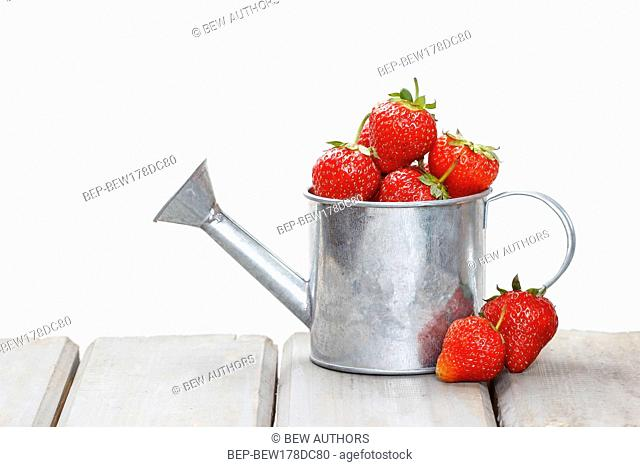 Strawberries in silver watering can