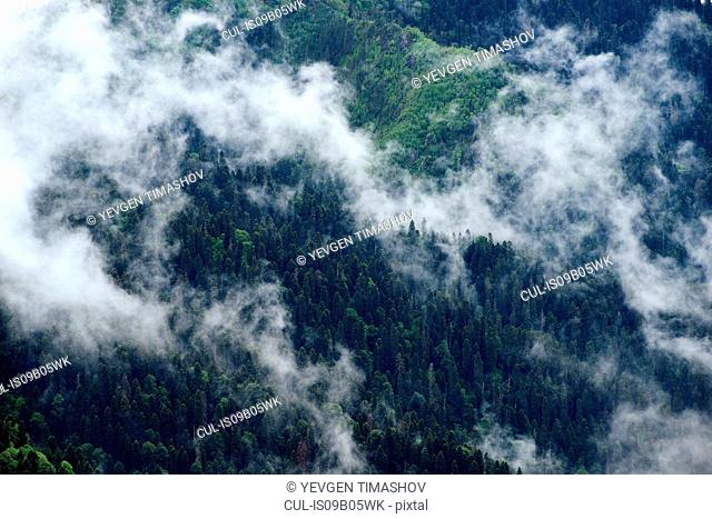 High angle view of misty forest, Bolshoy Thach (Big Thach) Nature Park, Caucasian Mountains, Republic of Adygea, Russia