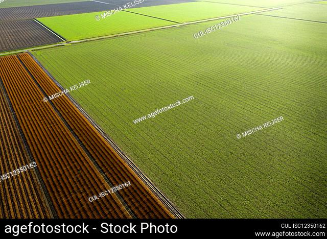 Netherlands, Noord-Brabant, Oud Gastel, Aerial view of agricultural fields