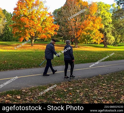A senior man and woman walking in the park amidst splendid autumn colours, Ontario, Canada
