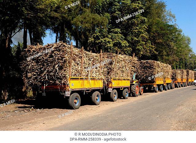 truck loaded with sugar cane, kolkata, west bengal, India, Asia