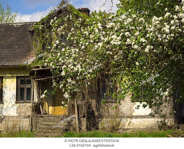 Spring. Old house. Podlasie region. Poland
