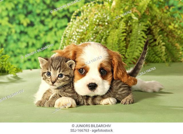 animal friendship : kitten and puppy