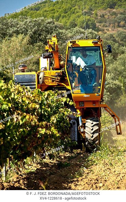 Vine- growing in Somontano  Barbastro  Huesca  Aragón  Spain  Europe