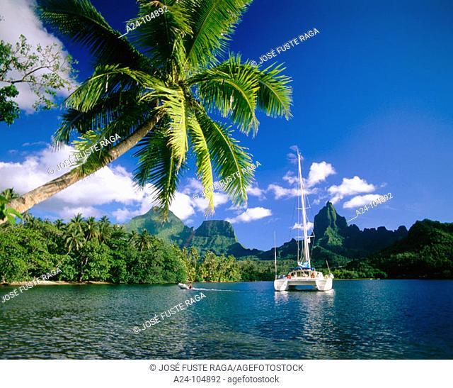 Opunohu Bay. Moorea Island. French Polynesia