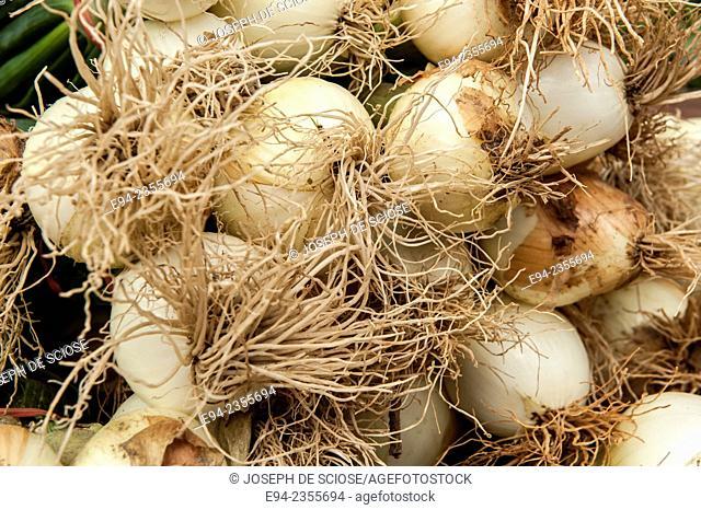 Fresh organic onions on display at a farmer's market