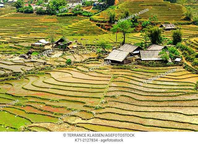 Terraced fields on the hillside and Lao Chai Village near Sapa, Vietnam, Asia