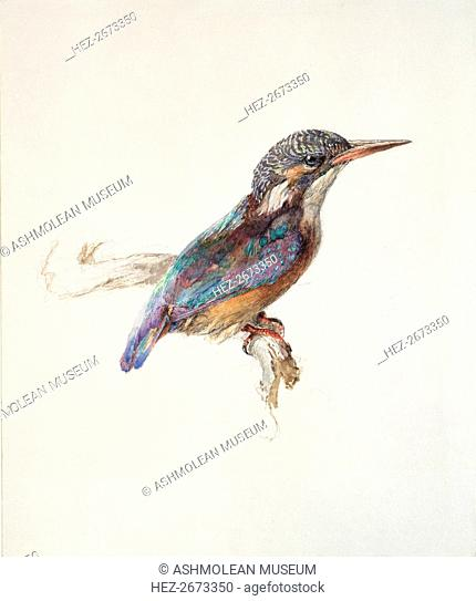 Study of a Kingfisher, with dominant Reference to Colour, probably October 1871. Artist: John Ruskin