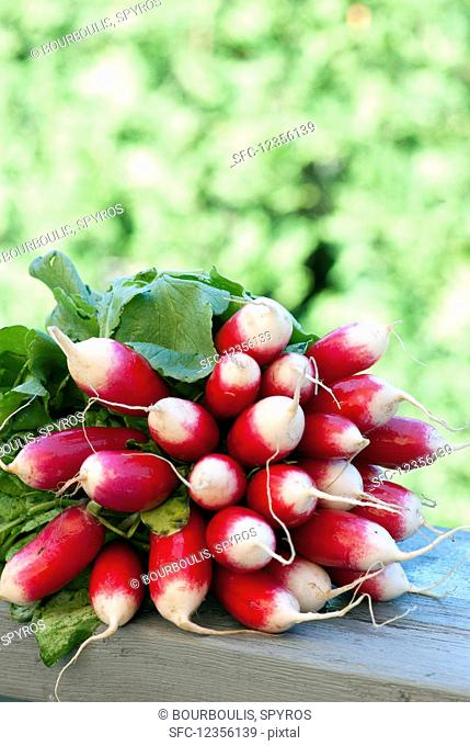 A fresh bundle of radishes at a farmers market