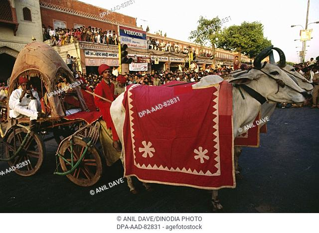 Cow cart in Gangaur festival , jaipur , rajasthan , india