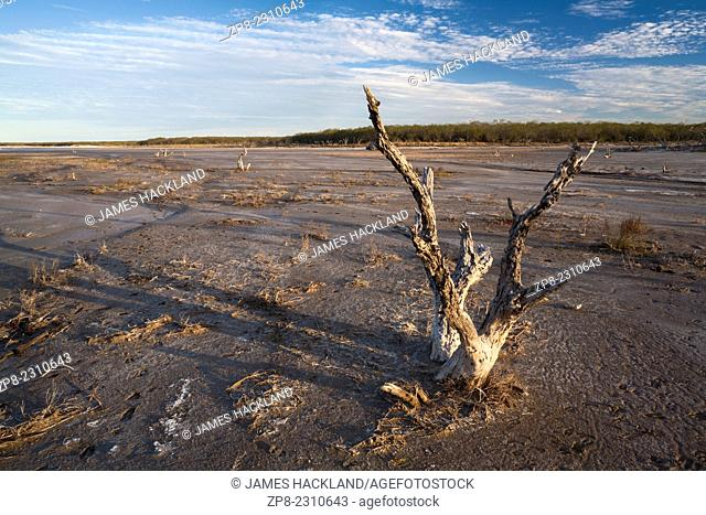 A dead tree in the middle of a dry salt lake. La Sal Vieja, Willacy County, Texas, USA