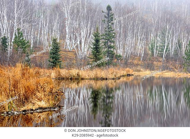 Reflections in a beaverpond in late autumn, Greater Sudbury , Ontario, Canada