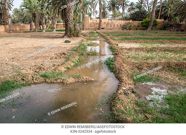 Water channel used for irrigation of alfalfa (Medicago sativa) field, Tighmert Oasis, Morocco