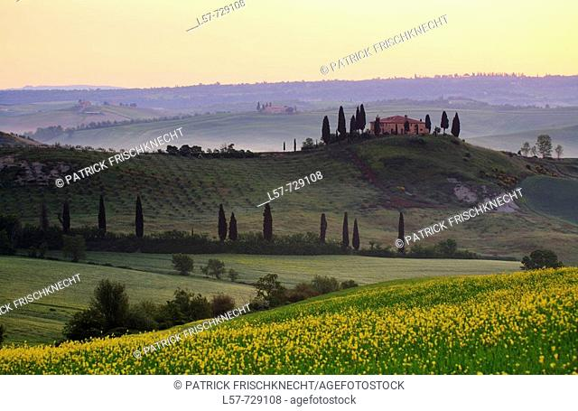 Cypress, Italian Cypress, Cupressus sempervirens, Rape, country house, farm house, hill countryside, agricultural landscape, Tuscany, Italy
