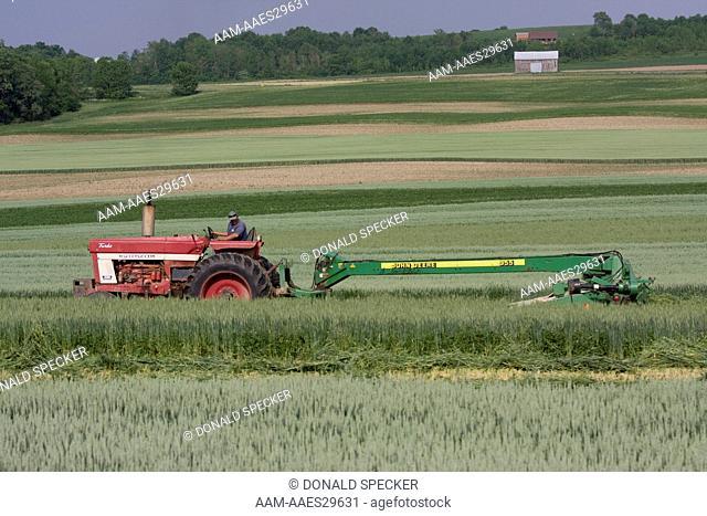 Farmer mowing strips of hay, Finger Lakes region, NY