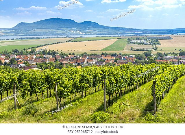 Palava with vineyards near Popice, South Moravia, Czech Republic