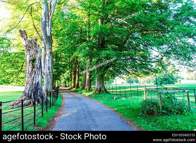 A Sunlit track running through the Dallam Park Estate. Cumbria