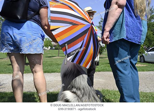 A woman in blue shorts holds a striped umbrella over a dog after the annual Pride March, Windsor, Canada