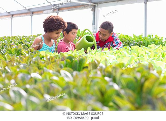 Three children watering plants in greenhouse