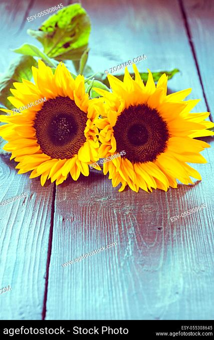 Three flowers of a sunflower on a dark wooden table. Toning in vintage style