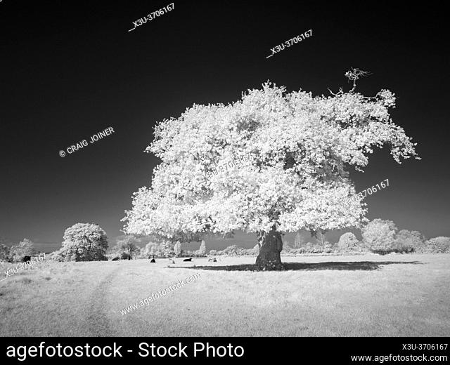 A black and white infrared image of countryside at Congresbury, North Somerset, England